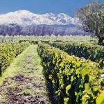 Caminos del Vino Mendoza